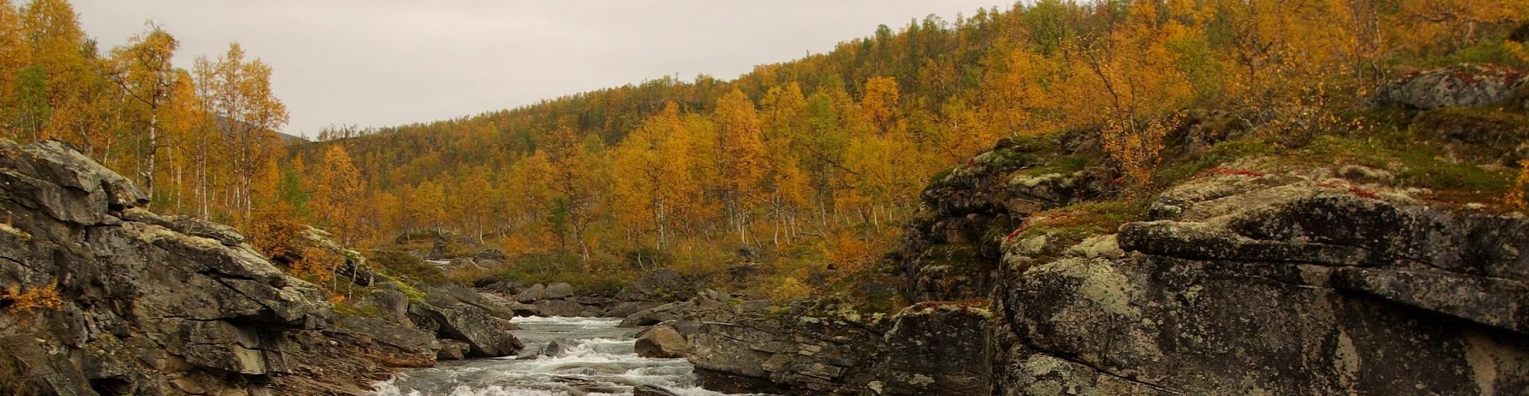 Höstlandskap och flod