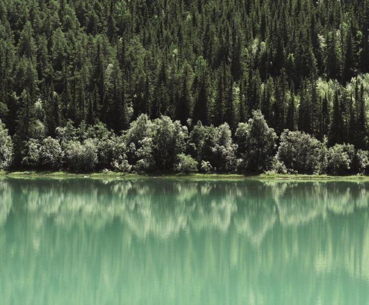 Gröna träd över vatten